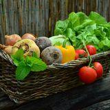 ヴィーガン生活でペットに必要な栄養素は与えられる? 犬や猫が食べてはいけない野菜・果物とは
