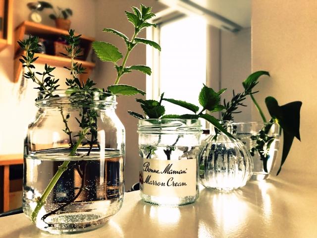 綺麗な水をいれた瓶と栽培中の植物