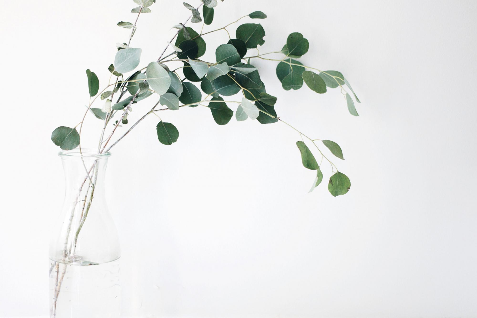 癒しを振りまく植物