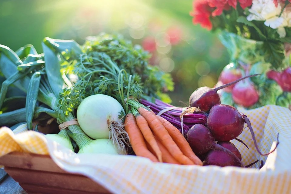 採れたて野菜の盛り合わせ
