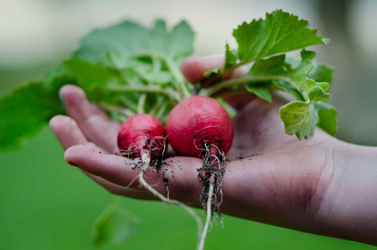 有機栽培・有機農業とは? オーガニックや無農薬とはどこが違うの?