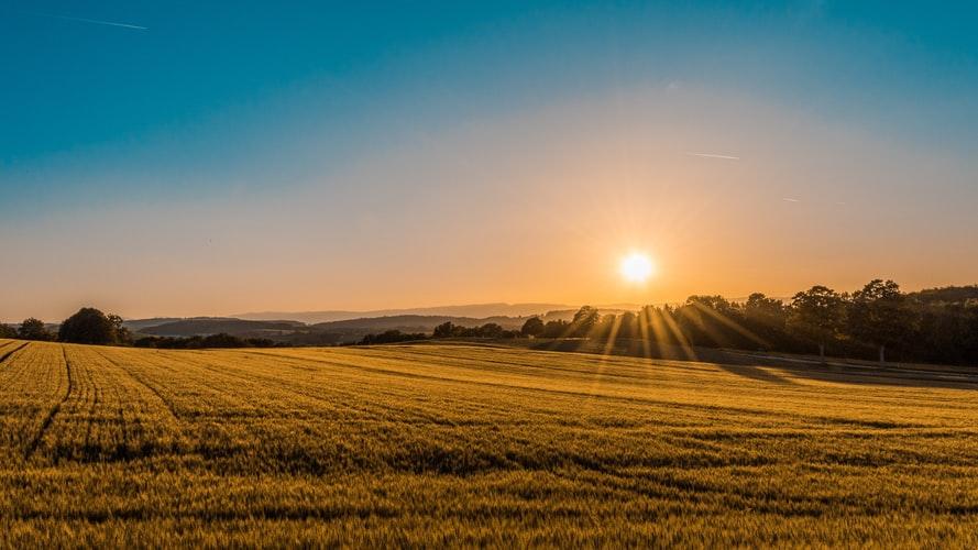 畑の先の太陽