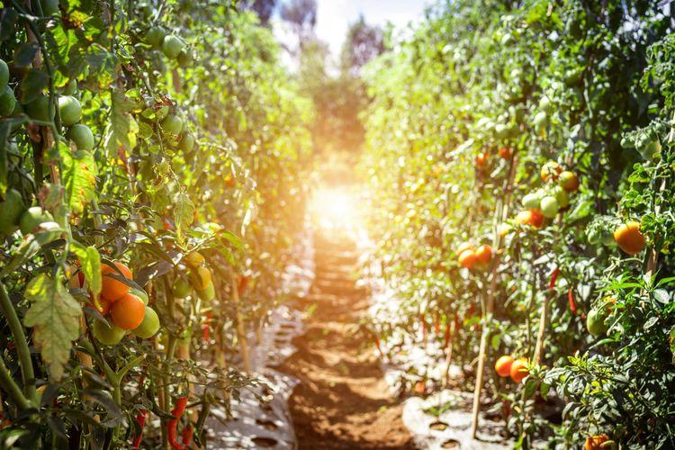 有機栽培のメリット・デメリットとは?|オーガニック食品を購入できるサイトを紹介