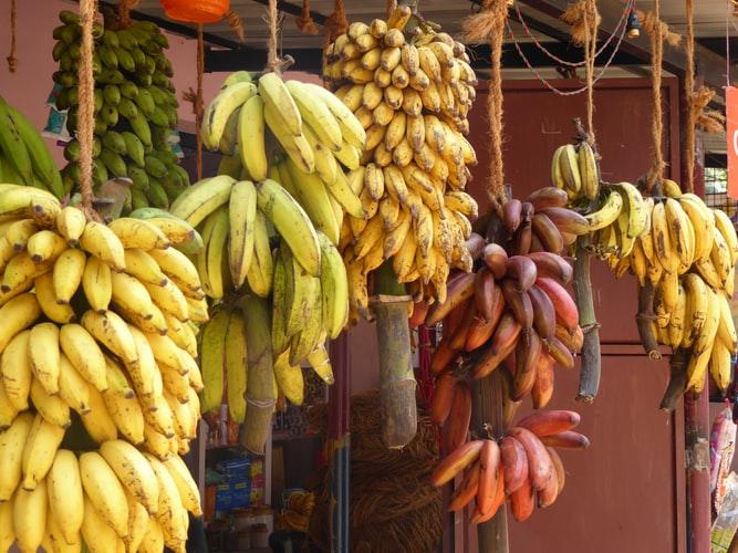 収穫された様々なバナナ