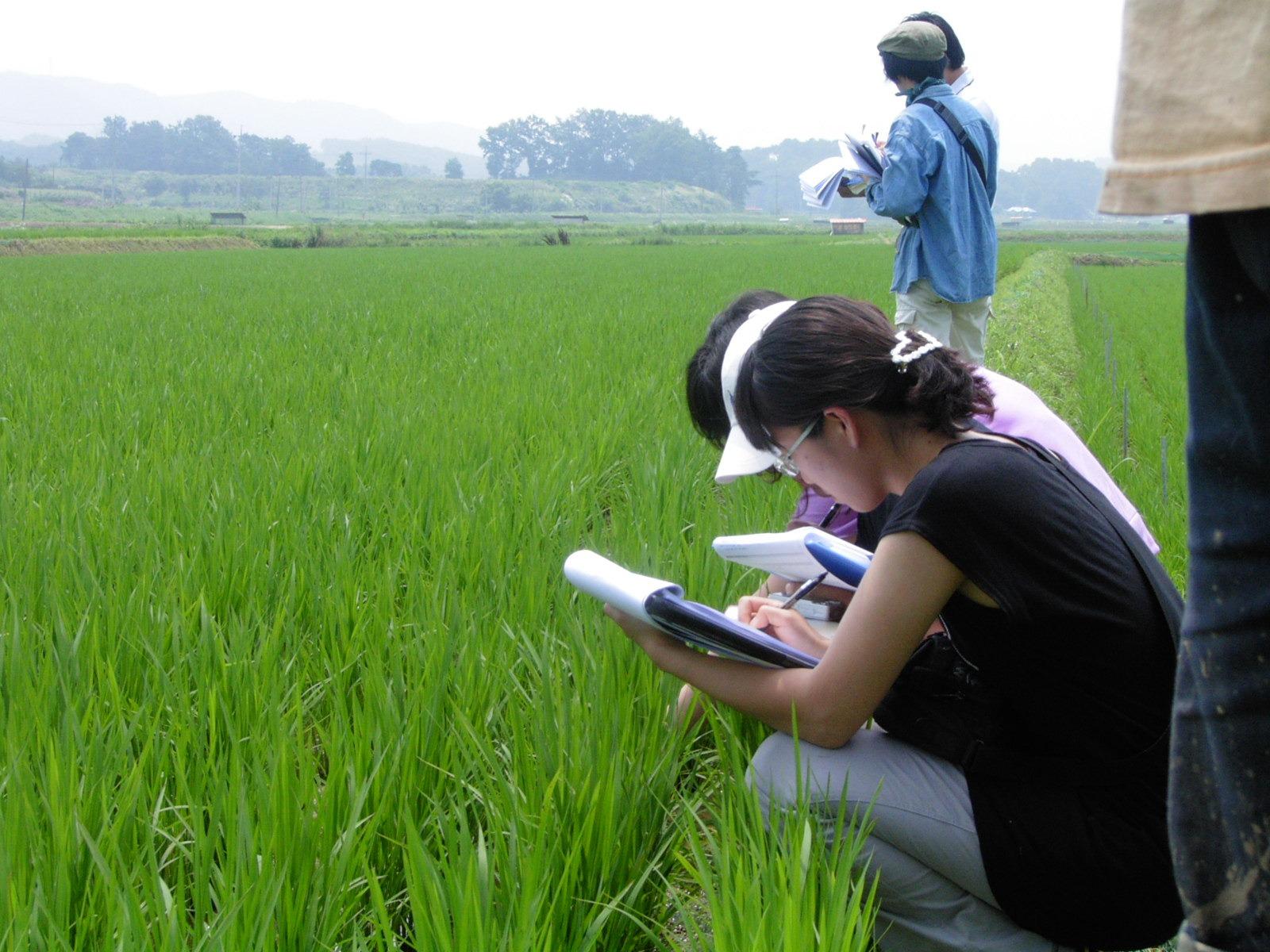徹底的に管理された稲