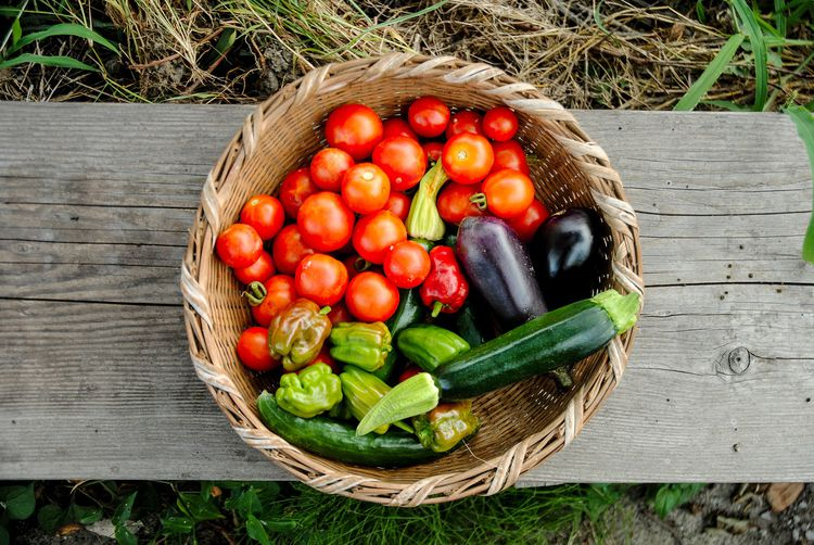 摘みたての畑の野菜