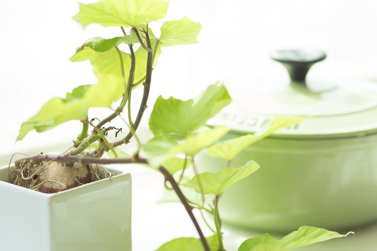 薄緑の鍋と同系色の草