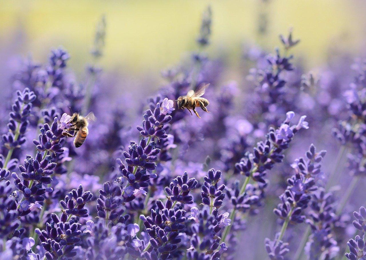紫色が美しい華