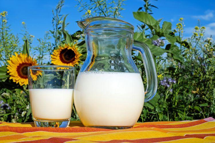 ヒマワリと牛乳