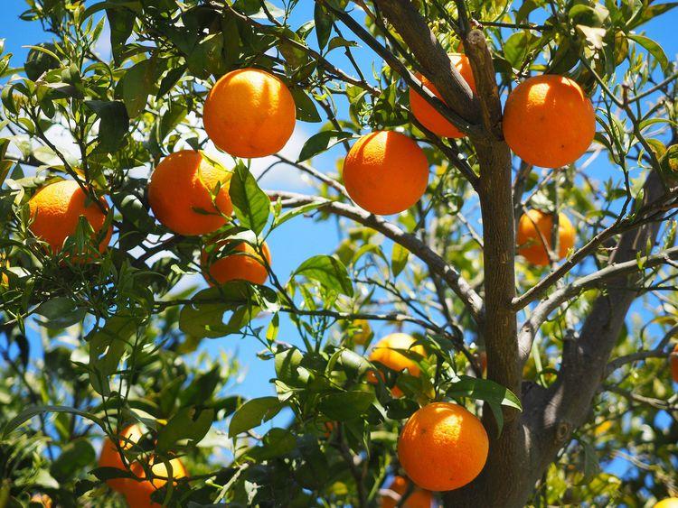 マクロビオティックの果物の選び方とは? どんな果物がおすすめなの?