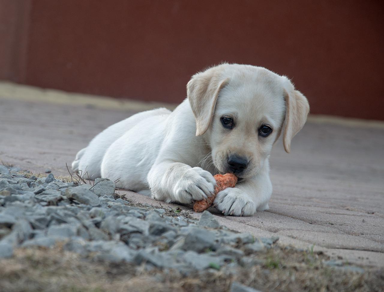 オーガニックドックフードと犬