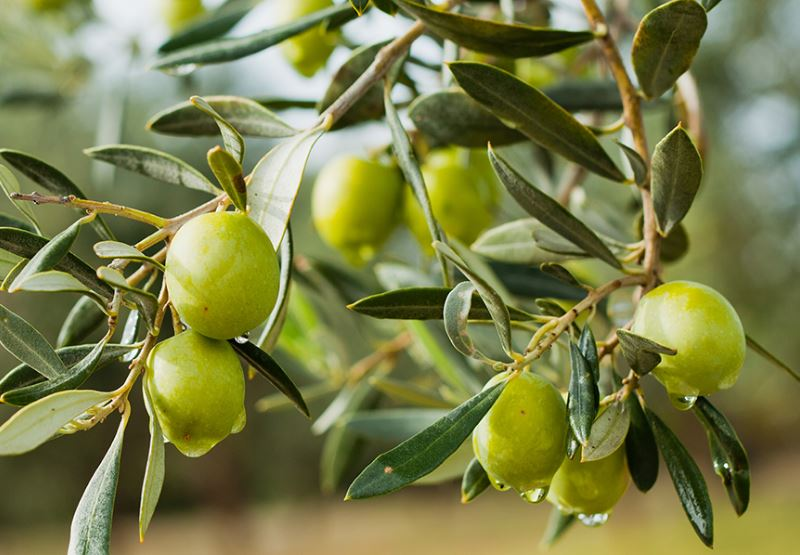 オーガニックの果実